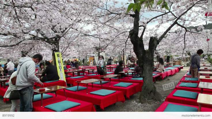 me8919992-3of-people-tourists-cherry-blossom-maruyama-koen-park-kyoto-hd-a0164